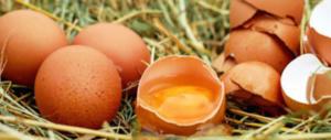 Uova al Fenopril: controlli a campione a Rovigo, Verona e Vicenza