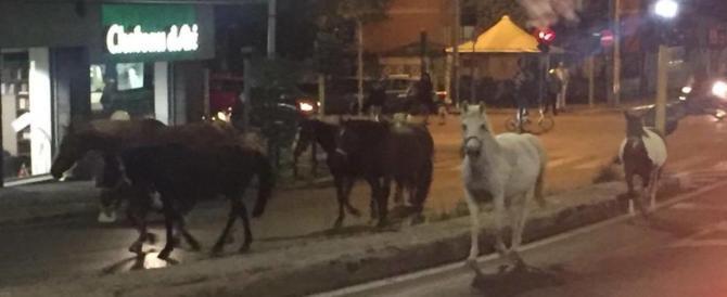 Cavalli al galoppo tra le auto seminano il panico a Roma: i vigili come cowboy