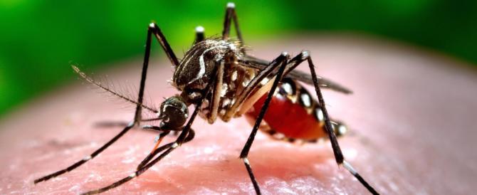 Chikungunya, 47 i casi nel Lazio: probabili nuovi contagi a Roma