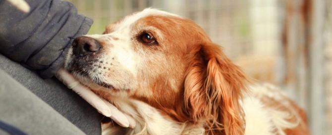 Immigrato violenta e uccide una cagnolina: l'orrore corre sul web