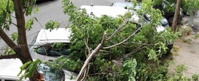 Roma, cade albero sulla via Cassia. Un uomo e una donna in codice rosso