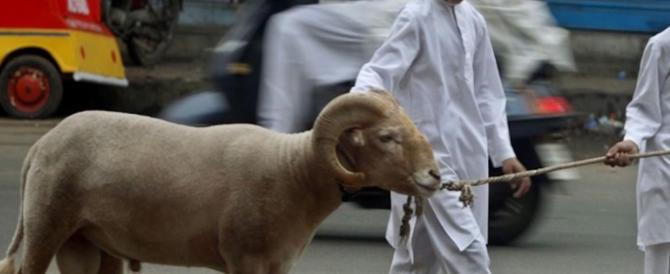 Festa islamica del Sacrificio: spopola la App per comprare le capre da sgozzare