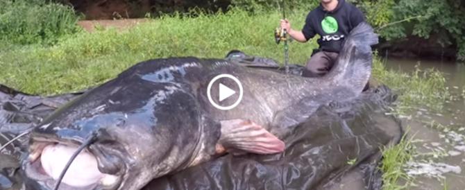 La lotta infinita con il pesce siluro, poi la resa della gigantesca creatura (video)