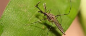 Il virus del Nilo fa tremare il nord Italia: altri due morti, decine di infezioni