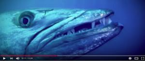 Orche marine, calamari giganti, squali: il terrore degli abissi dal vivo a Times Square (VIDEO)