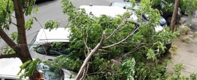 Roma, un grosso pino cade su un taxi. Soccorso l'autista, non è grave