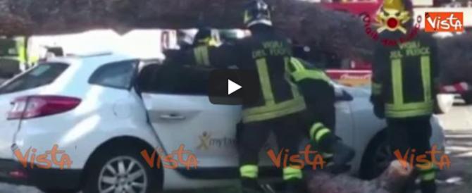 Roma, albero crolla su un taxi: salvo per miracolo l'autista (video)