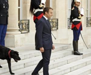 Il cane di Macron vede i ministri e fa pipì in sala: imbarazzo all'Eliseo (video)