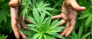 La cannabis non è aria fresca: spieghiamolo ai nostri giovani