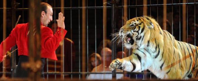 Il mondo del circo pronto a scendere in piazza: «Senza animali sarà la fine»