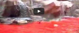 10 anni fa la fontana di Trevi si tinse di rosso. Ecco i motivi del blitz futurista (video)