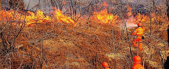 Incendi, accuse alla riforma Madia: senza il Corpo forestale è un disastro