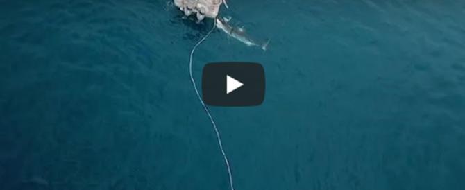 Squalo bianco attacca la barca del pescatore e cerca di trascinarla (video)