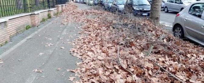 Nuova vergogna Raggi: Roma invasa dal fogliame, strade insicure