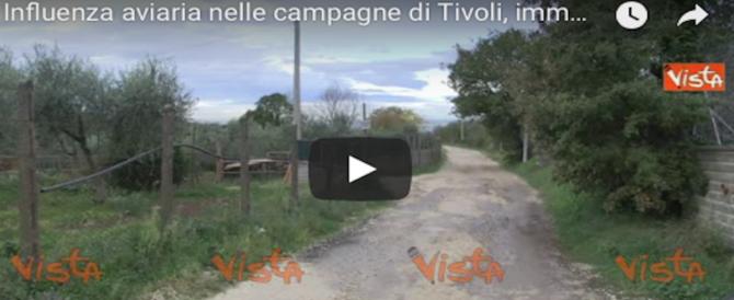 """Allarme influenza aviaria, un focolaio a Tivoli: 10 Km di """"zona rossa"""" sotto osservazione (VIDEO)"""