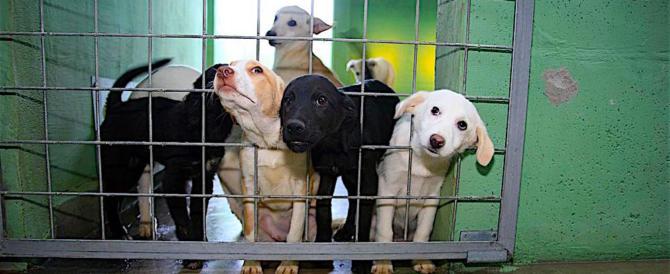 Duecentomila i cani e gatti abbandonati in Italia, più di 300 al giorno