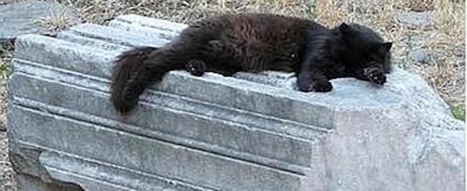 «L'assassina dei gatti è tornata. Fermatela». L'appello dei romani