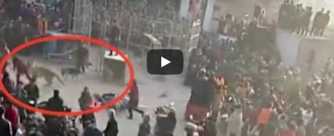 Tigre scappa dalla gabbia di un circo e morde due bambini (video)