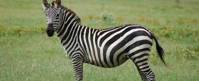 """«Zebra si scrive con due """"b""""». Ecco cosa insegnano ai nostri figli a scuola"""