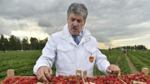 Tra gli avversari di Putin c'è anche un coltivatore di fragole