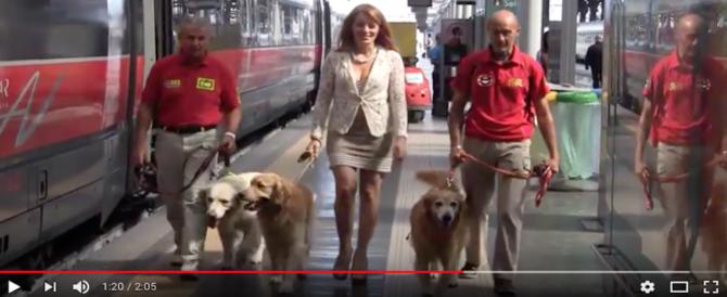 Cani e gatti sui treni? Una battaglia di sempre della Brambilla. Ecco come fare