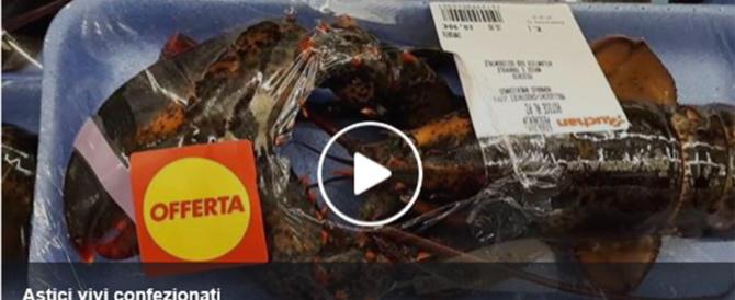Astici maltrattati e confezionati vivi in un supermercato. Video-denuncia