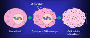 L' importanza delle statine per bloccare la progressione del tumore
