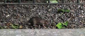 «Benvenuti a Roma: borseggi, topi, truffe». Il racconto dei turisti sul web