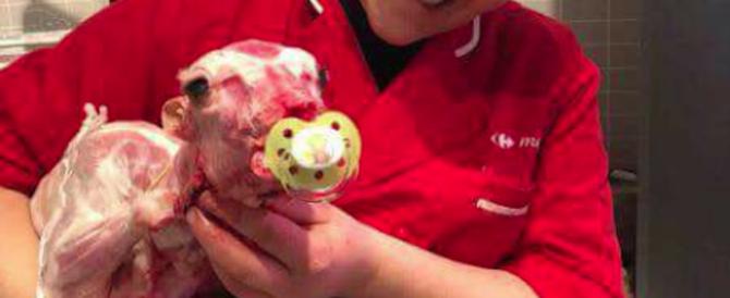 Selfie con l'agnellino morto: bufera sulle dipendenti di un Carrefour di Tivoli