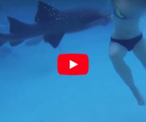 Un viaggio di nozze da paura: la sposina viene attaccata dallo squalo (video)