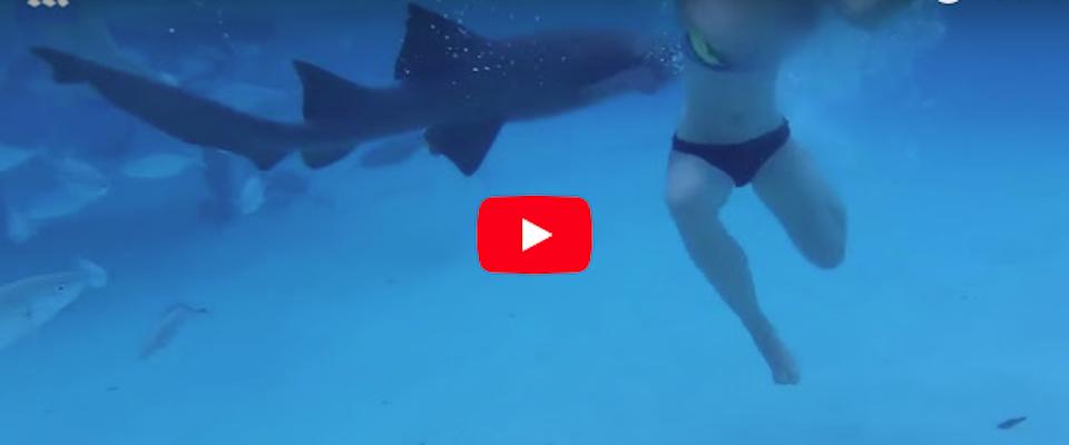sposina attaccata da squalo