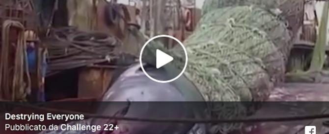 Squalo gigante impigliato nella rete e poi rigettato in mare (video)