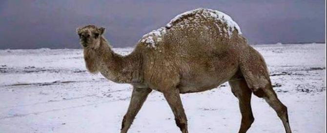 """Arabia nel gelo e neve nel deserto: e poi parlano di """"global warming"""""""