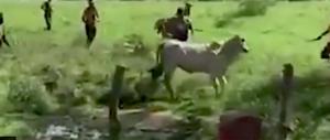 Venezuela, con pietre a bastoni ammazzano una mucca per fame (video)