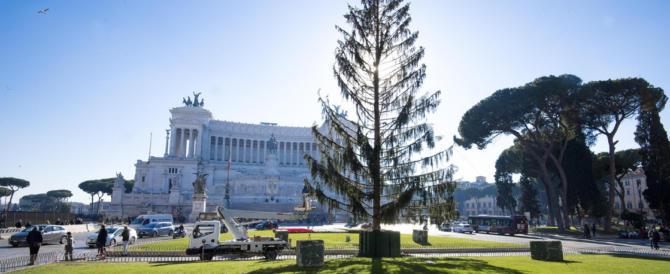 Spelacchio, finale grottesco: si muove Cantone. «È costato quanto 2 alberi»