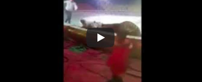 Terrore al circo: tigre e leone attaccano e sbranano un cavallo (video)