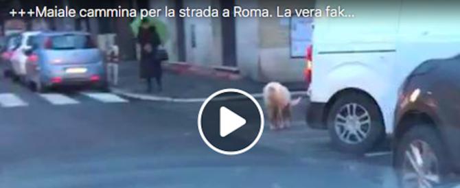 """Meloni zittisce Di Maio: """"Ecco la prova che il maiale per Roma non è fake news"""" (video)"""