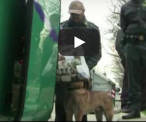 Sul bus con 3 chili di stupefacenti: nigeriano scoperto dai cani antidroga (video)