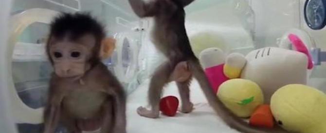 Clonazione, le scimmie cinesi fanno inorridire il Vaticano: minaccia per l'umanità