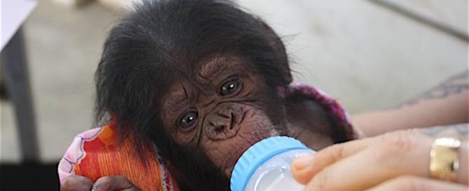 Storia di Natale: ruba scimmietta a un bambino malato, denunciato