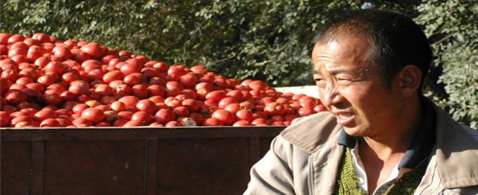 Fornivano ortaggi e frutta ai ristoranti di Firenze: chiuse 50 serre clandestine cinesi