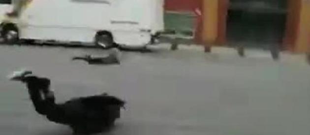 "L'uragano ""Friederike"" devasta il Nord Europa: 6 morti e tarsporti in tilt (video)"