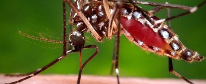 Allarme salute: s'avvicina all'Europa una pericolosa zanzara tropicale