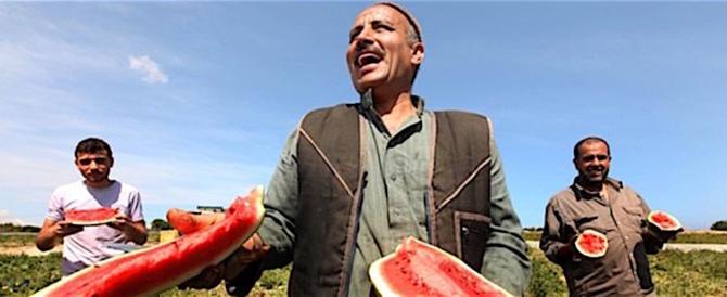 La Ue regala 317mila euro agli agricoltori palestinesi. E ai nostri?