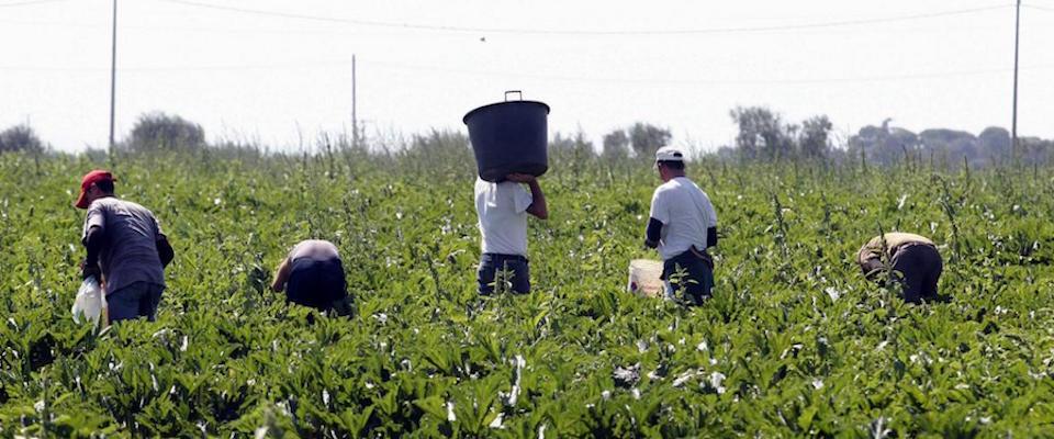 La Meloni contro Saviano: «S'è accorto adesso che i clandestini vengono sfruttati…»