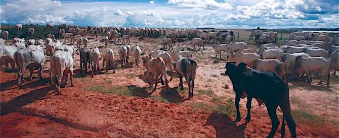Carni sudamericane: Usa e Cina bloccano l'import, la Ue invece apre
