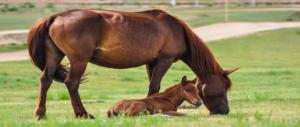 Roma, scoperto allevamento 'Lager': sequestrati 59 tra cavalli, pony e asini