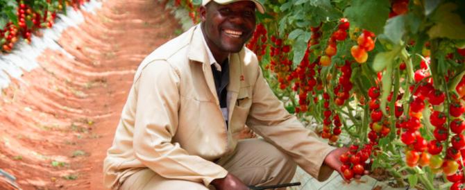 """A Pachino vendono i pomodori del Camerun: """"Ringraziate la Ue"""""""