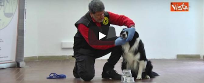 Ecco in azione cani con un super olfatto sulla scena del crimine (video)