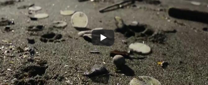 Si allarga l'invasione di dischetti di plastica nei mari. Mistero sull'origine (video)